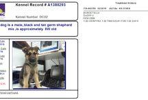 Houston TX.Harris County Animal Control - URGENT ADOPTABLE DOGS...HOUSTON, TEXAS