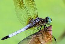 Butterflies & Dragonflies / by Ryunosuke
