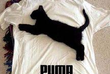 Chat c'est drôle / Photos, blagues, vidéos amusantes avec les chats