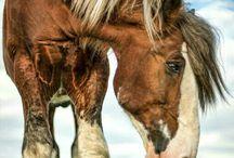 Hästar- Horses