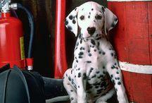 My future puppy <3