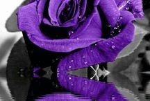 All Things Purple :-)