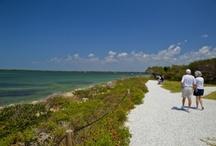 Florida / by Lynn O'Donnell