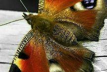 kelebeklerim