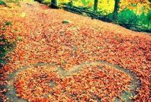 Herfst♥