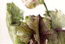 Botanical Divines