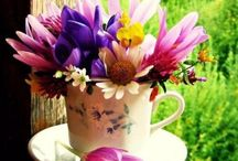 Flower ❤ Cup of Flowers