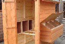 chicken coops and info