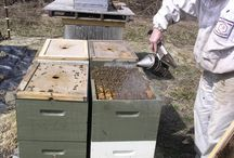 Beekeeping / All about bees.