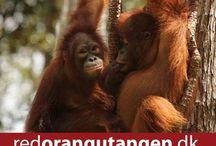 save the orangutan / help us all by savning the orangutan