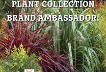Sunset Western Garden Collection Brand Ambassador / Show us how YOU use Sunset Western Garden Collection plants in YOUR landscape!