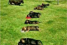 Zvířata amazlíčci