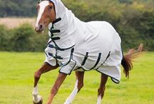 Equestrian Protection