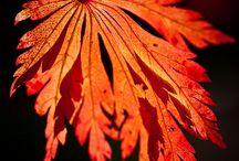 Black And Orange Autumn