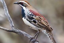 Beautiful birds / by M. S.