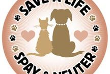 SpAy&NeuteR / Spay and neuter for a healthy pet.