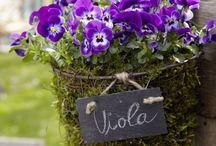 kwiaty,ogródek