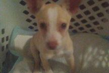 12 month old puppy