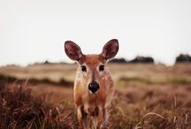 Beautiful Photographs / by Linda Yun