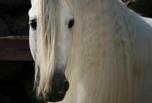 Horses / I love horses and want to become a jockey .. And will soon buy a horse
