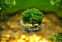 Alghammas