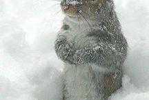 Squishy squirrels