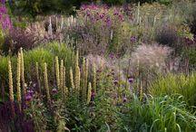 cottege flowers / Garden