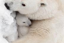 Alaska Tiere