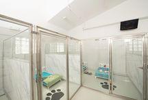 dog - cat hotels
