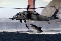 shark e altro ancora