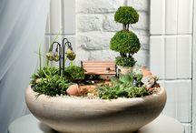 Miniträdgårdar