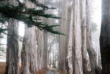 Необыкновенные деревья