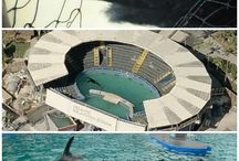 Marine Parks / The truth about SeaWorld and other marine parks.