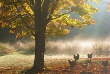 Farms / by Judy Thibado