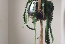 Plants / by Olivia Vidallon