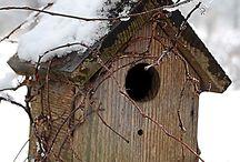 Bird Houses** / by Denise Newlyn