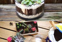 Centros con cactus