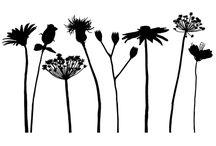 Obrazky - rastliny