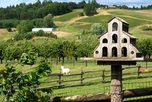DIY Birdhouses, bird feeder & bird baths... / by Julie Sturtevant