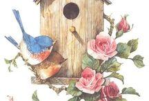 kuşlarKuşlar