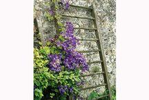 Fleurs Grimpantes / Des idées pour la box Fleurs Grimpantes : fixer ses fleurs sur des supports divers, aménager sa terrasse ou son balcon...  http://www.cultiversonjardin.fr/box/16/Box-Fleurs-Grimpantes