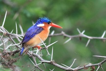Birdlife / Birds from South Africa