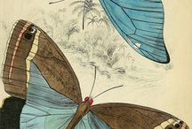 buttetflies
