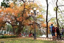 Hanoi's famous loc vung tree / The #leaves of the old loc vung tree on the shore of Hoan Kiem Lake in Hanoi have changed to red and yellow before the spring, luring tourists and photographers.