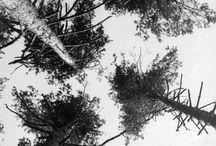 Rodchenko Trees