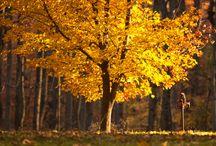 Fall - Josh Bassett Photography / Fall / Autumn foliage photography