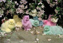 Kitties / by Kitty's Vintage Salon