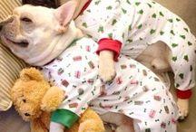 Animals / Pijama dog