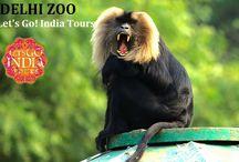 Delhi Zoo / Read blog on Delhi Zoo   http://letsgoindiatours.blogspot.in/2016/06/delhi-zoo.html