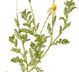 teas, herbs, and oils